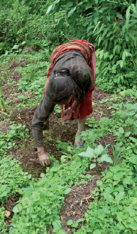 Edifici agrícola pel grup de dones Chema Devi a la comunitat de Dhuskun (Nepal) (2011)